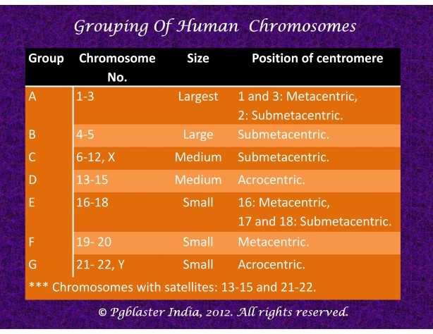Grouping of human chromosomes
